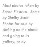 Most photos taken by Sarah Piestrup.  Some by Shelby Scott.  Photos for sale by clicking on the photo and going to its gallery, or by email.